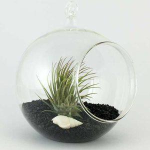 terariu-plante-aeriene