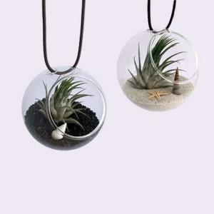 set-globuri-sticla-plante-aeriene