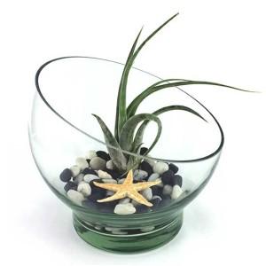bol-sticla-inclinat-plante-aeriene