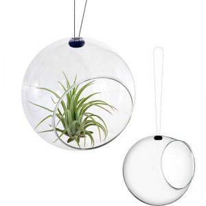 glob-design-scandinav-plante-aeriene-12-cm