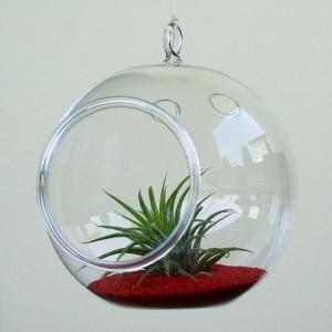 plante-aeriane-terariu-glob-12-cm