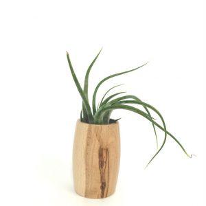 plante aeriene suport lemn